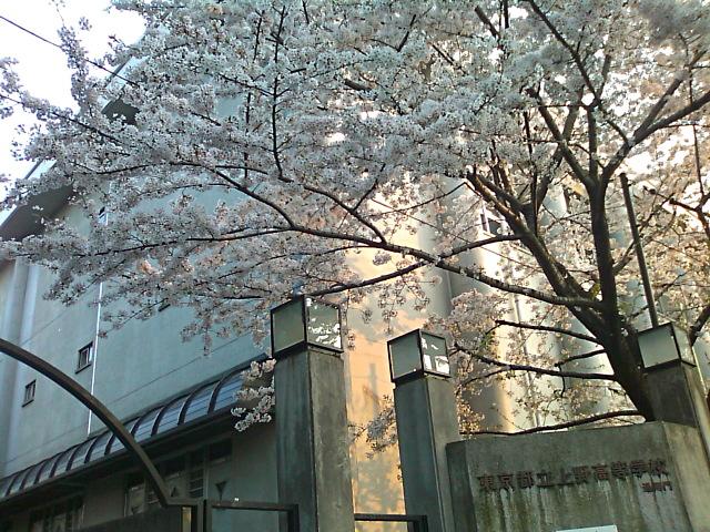 64期生入学式後の桜