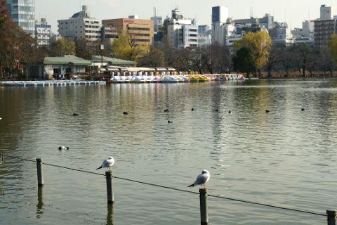2010shinobazuekiden.jpg