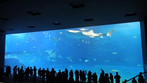 2011-okinawa01.jpg