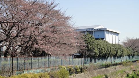 20110405kurumenishi.jpg