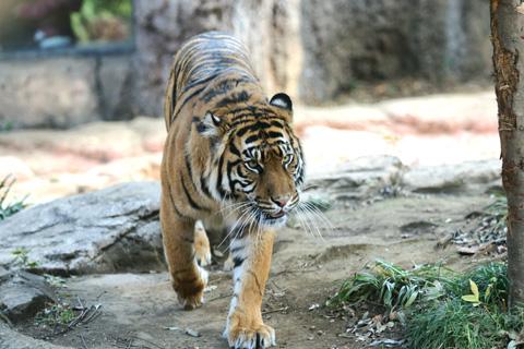 2011ueno_zoo00.jpg
