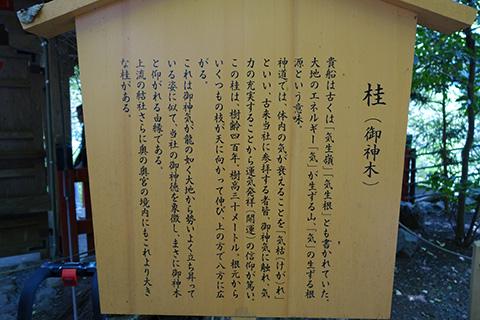 貴船神社 御神木の説明