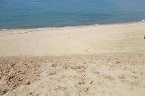 砂丘の海側